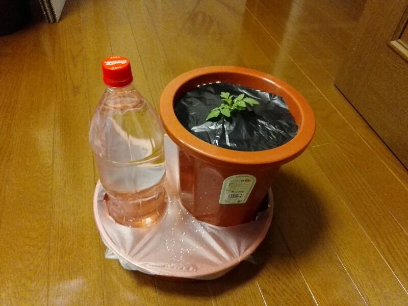 ミニトマト栽培キット完成